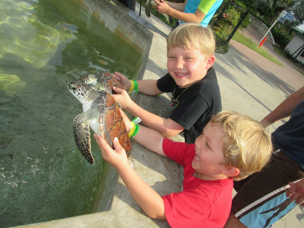 I'n not sure what's more adorable, the turtle or those two boys.